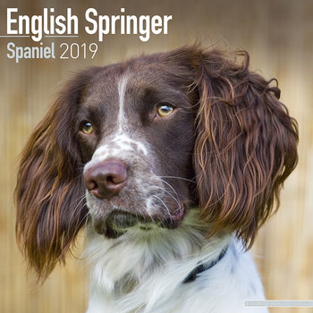 Eng Springer Spaniel Календари 2019