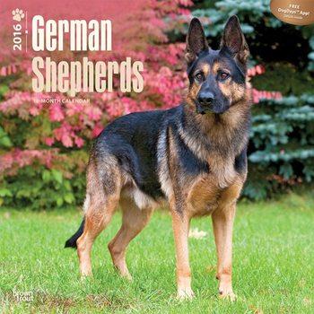 German Shepherds Календари 2017