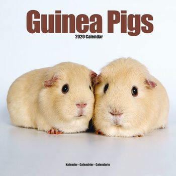 Guinea Pigs Календари 2020