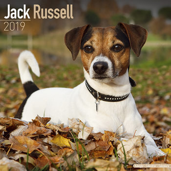 Jack Russell Календари 2019