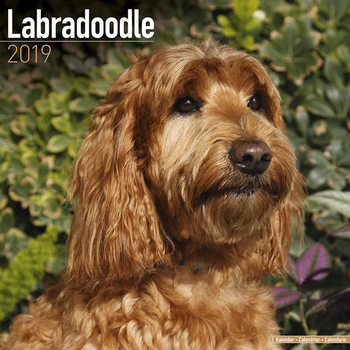 Labradoodle Календари 2019