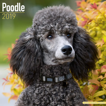Poodle Календари 2019