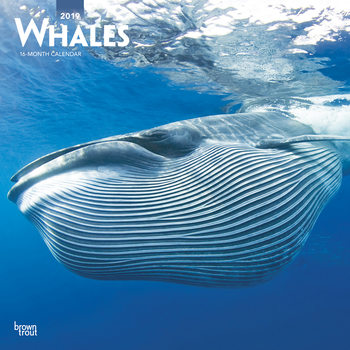 Whales Календари 2019