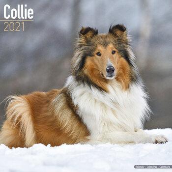 Календар 2021 Collie