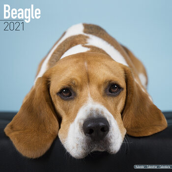Календар 2021 Beagle