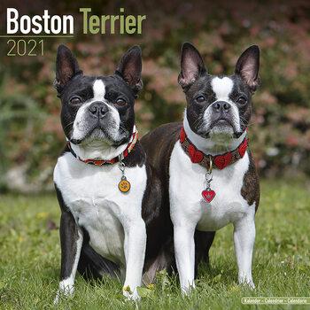 Календар 2021 Boston Terrier