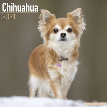 Календар 2021 Chihuahua