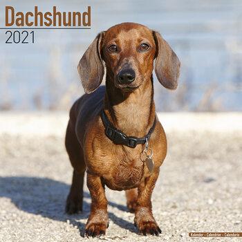 Календар 2021 Dachshund