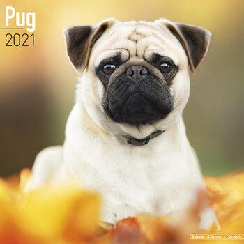 Календар 2021 Pug