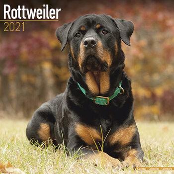 Календар 2021 Rottweiler