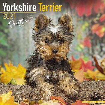 Календар 2021 Yorkshire Terrier