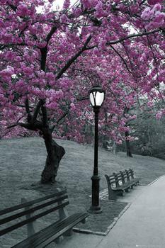 Central Park - blossom Плакат