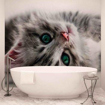 Cat Kitten Фотошпалери