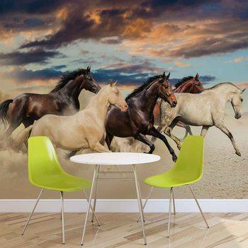 Horses Фотошпалери