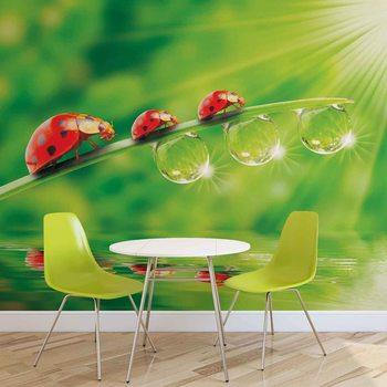 Ladybird Фото-тапети
