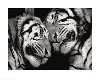 Marina Cano - Sleeping Tigers Художествено Изкуство