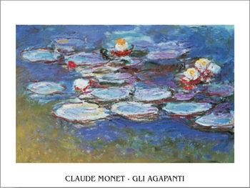 Water Lilies (Agapanthus) Художествено Изкуство