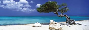 Divi divi tree - Tom Mackie - плакат