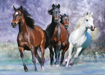 Horses - Running, Bob Langrish плакат