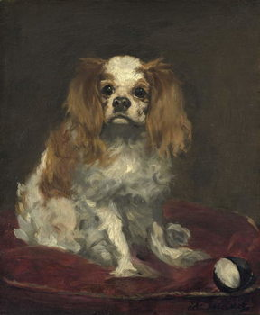 A King Charles Spaniel, c.1866 Художествено Изкуство