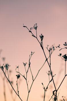 художествена фотография Dried plants on a pink sunset