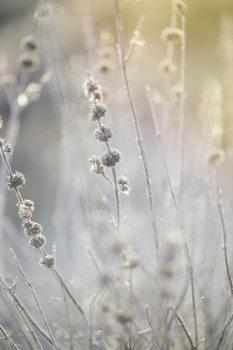 художествена фотография Dry plants at winter