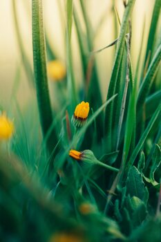 художествена фотография Green-flowers-and-plants-from-nature