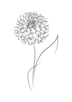 илюстрация Line bloom