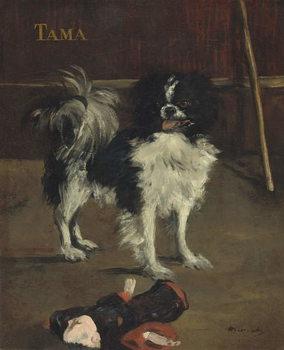 Tama, the Japanese Dog, c.1875 Художествено Изкуство
