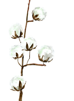 илюстрация Watercolor cotton branches