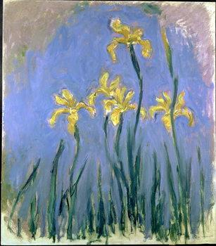 Yellow Irises; Les Iris Jaunes, c.1918-1925 Художествено Изкуство