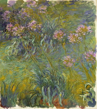 Agapanthus, 1914-26 Художествено Изкуство
