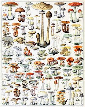 Illustration of Mushrooms  c.1923 Художествено Изкуство