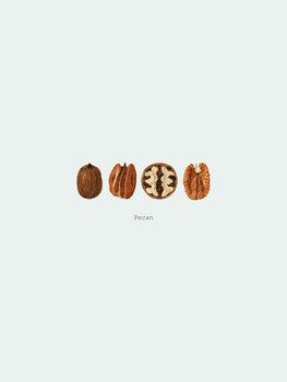 илюстрация pecan