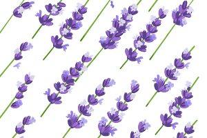 Provence vzory
