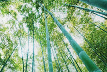 """Bambus """