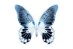 Miss Butterfly x Ray