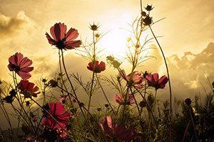 Blumen und Pflanzen - Fototapeten