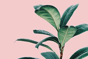 Flores y Plantas - Pósters