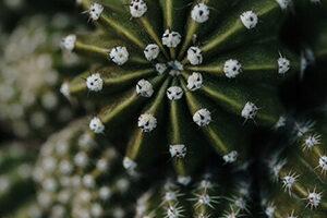 Trópusi nővények & kaktuszok