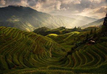 Ταπετσαρία τοιχογραφία  A Tuscan Feel In China