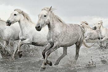 Poster White Horses