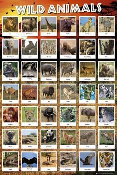 Animals Affiche
