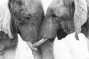 Éléphants - Touch Poster