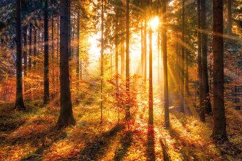 Forêt - Sun Poster