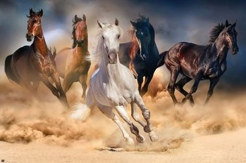 Les chevaux - Five horses Poster