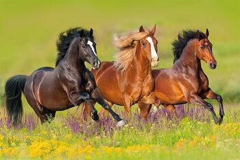 Les chevaux - Run Poster