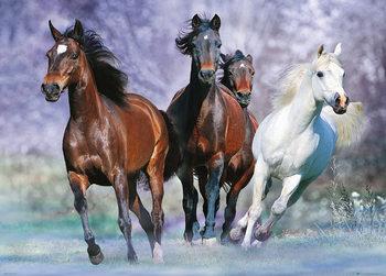 Les chevaux - Running, Bob Langrish Affiche
