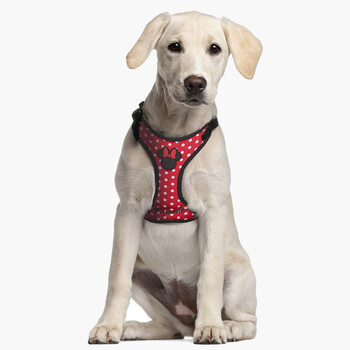 Accesorios para perros Arneses para perros Minnie Mouse
