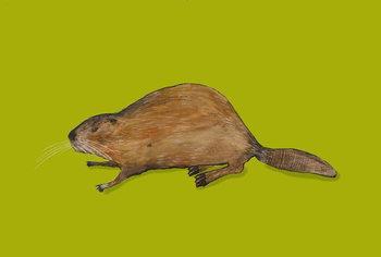 Beaver Obrazová reprodukcia